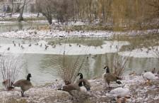 Зоопарк птицы озеро водоем пруд зима