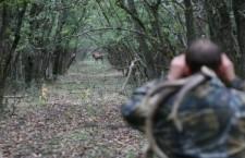 Охота лес