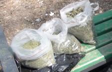 конопля наркотики droguri