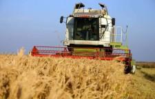 griu зерно пшеница комбайн агро аграрии