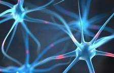 мозг нейроны