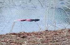Обнаружено-тело-утопленника-предположительно-разыскиваемого-за-убийство…--800x445