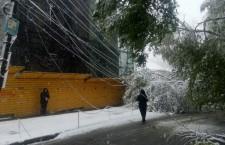 деревья, провода, снег