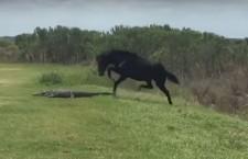 лошадь напала на аллигатора