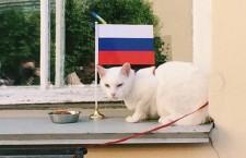 kot_akhill_predskazal_pobedu_sbornoy_rossii_v_pervom_matche_kubka_konfederatsiy