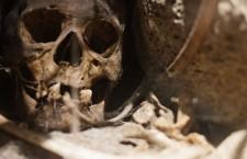 череп, останки